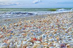 The seashells of Sanibel Island, Florida.