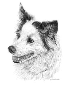 Image result for pencil drawings of dogs