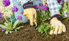 Come eliminare le erbacce in modo naturale | I sempreverdi
