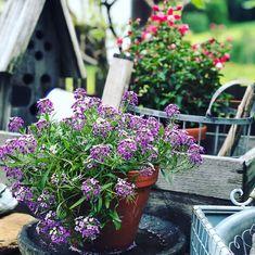 in meinem Garten glauben wir noch an Märchen Plants, Nature, Plant, Planets