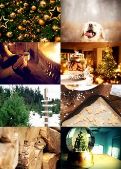 hp-aesthetic: Winter Holidays Aesthetic: Hufflepuff House ( Gryffindor | Ravenclaw | Slytherin )