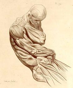 Distinct, very modern flavor to this (1779) Nouveau recueil d'ostéologie et de myologie by Jacques Gamelin