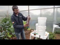 Conheça as vantagens do cultivo de hortaliças orgânicas para a propriedade, aprenda como funciona o manejo do solo e a prevenção de pragas e doenças. Saiba a...