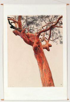 David Rose: Large angophora drawing :: Dobell Prize for Drawing 2003 :: Art Gallery NSW Botanical Drawings, Botanical Art, Botanical Illustration, National Art School, David Rose, 3d Drawings, Rose Art, Photo Tree, Australian Artists