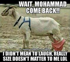 Goat lovin'