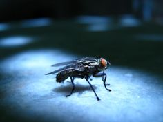 Vliegen (huisvlieg, kamervlieg, bromvlieg etc.) worden aangetrokken door licht, warmte en minuscule etensrestjes. Vliegen zijn zodoende dol op huizen, wat de bestrijding van vliegen lastig maakt! Daarom hierbij de broodnodige tips voor het bestrijden van vliegen in je huis, waaronder vliegenvallen, vliegenlinten & insecticiden
