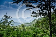 High in the Vosges Mountains near Natzwiller, Alsace, France at an altitude of 1000 metres
