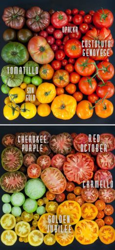 Tips On Growing and Finding Your Perfect Tomatoes!
