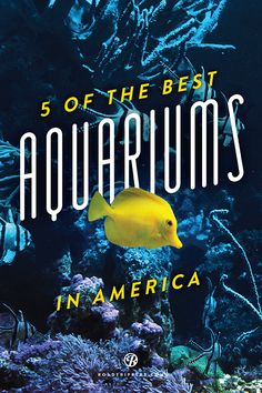 5 of America's must-visit aquariums!