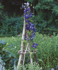 Build a Rustic Tuteur. Full instructions at http://www.finegardening.com/how-to/articles/build-rustic-tuteur.aspx