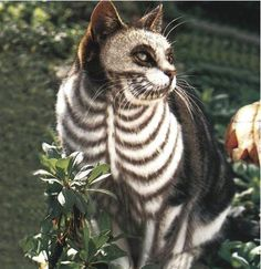 haloween cat