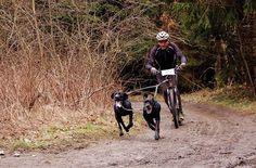 Jaroslav Banoci - kolobežky Kostka Mushing Interview, Bicycle, Outdoor, Outdoors, Bike, Bicycle Kick, Bicycles, Outdoor Games, The Great Outdoors