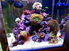 Seahorse Aquarium, Saltwater Aquarium Setup, Coral Reef Aquarium, Saltwater Fish Tanks, Marine Aquarium, Aquarium Fish Tank, Aquarium Ideas, Nano Reef Tank, Reef Tanks