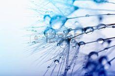 Macro photo R sum des graines de plantes avec des gouttes d eau  Banque d'images