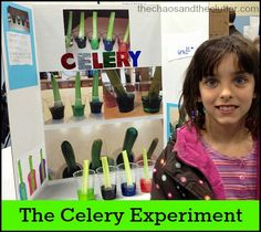 Colourful Celery Experiment