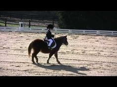 What a great little pony!  Dylan Phillips and Rusty -The Pony Dressage - these two are adorable!