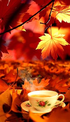 Gif autumn 🍂 leaves with steaming hot cup Of tea Morning Pictures, Fall Pictures, Good Morning Images, Autumn Tea, Autumn Leaves, Good Morning Coffee Gif, Coffee Images, Autumn Scenes, Autumn Aesthetic