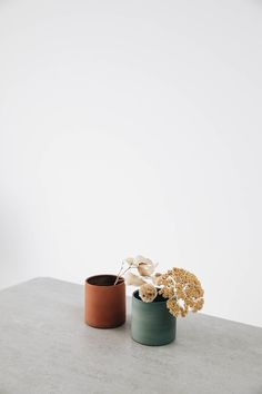 Ed Wallpaper, Flower Background Wallpaper, Flower Backgrounds, Wallpaper Backgrounds, White Aesthetic, Aesthetic Art, Aesthetic Pictures, Minimalist Photos, Minimalist Wallpaper