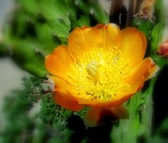Fotografías de Claudia Espinoza Jimenez Plants, Dios, Planters, Plant, Planting