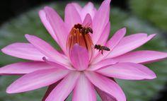 Cuộc sống của các chú ong