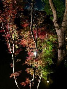 紅葉ライトアップ☆