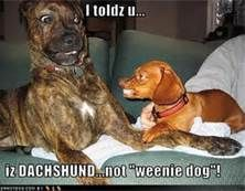 funny dog pics with captions - Bing Images