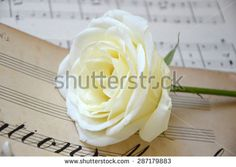 Ring and rose - stock photo