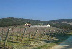 Masseto Hans Kollhoff, Vineyard, Outdoor, Outdoors, Vine Yard, Vineyard Vines, Outdoor Games, The Great Outdoors