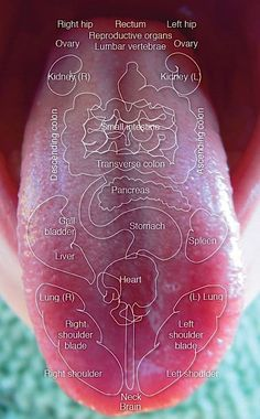 A Tongue Health Diagnosis will help you keep on top of what is going on internally. We have lots of charts and Pinnable information. Watch the video too. Health Chart, Health Facts, Health And Nutrition, Health And Wellness, Health Tips, Foods For Gut Health, Complete Nutrition, Health Recipes, Health Quotes