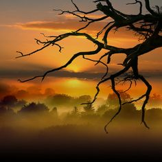 DEAD TREE by RAYANDBEE on Flickr.