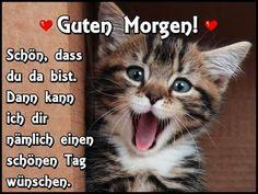 Happy kitty...