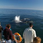 Book memorable Hermanus whale tour with Southern Right Charters. Hermanus is the capital of the Cape Whale Coast, and whale season runs from June to December each year. Whale Watching, How To Memorize Things, Coast, Southern, Waves, The Incredibles, Tours, Outdoor, Outdoors