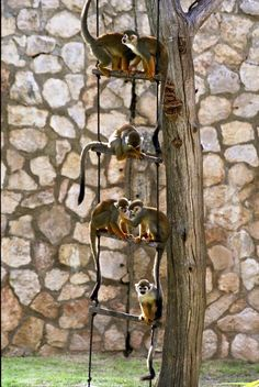 Easy to make ladder for climbing species