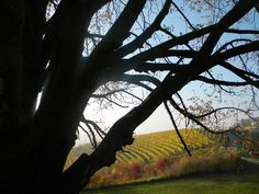 Autumn  with  lights  and  shades  in  Langhe  by  luigi  rabellino