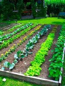 Zo hier en daar een rijtje Afrikaantjes tussen je groenten planten. Goed tegen ongedierte!