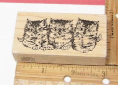PSX THREE KITTY CAT KITTENS TABBY E611 RUBBER STAMP #PSX #rubberstamp