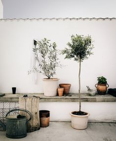 Coloring on the terrace (Daniella Witte) - All For Garden Rooftop Garden, Balcony Garden, Garden Plants, Potted Plants, Olivier En Pot, Outdoor Spaces, Outdoor Living, Olive Tree, Scandinavian Home