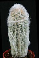 Cactus - Discocactus - Echinocereus - Ferocactus
