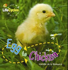 Easily accessible non fiction text to use when asking questions / researching chickens.