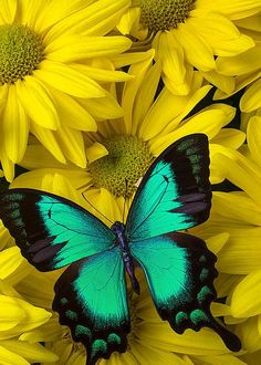Beautiful Green Butterfly  by Garry Gay