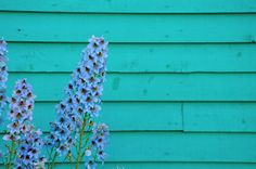 This reminds me of my gramma and gramps home, same color and same flowers.