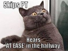 """Top 56 Hilarious Memes Guaranteed To Make You Laugh """"LOL. If you're having a bad day, check these top 56 memes that will make you cry laughing Memes Humor, Funny Animal Memes, Funny Animal Pictures, Funny Cats, Funny Animals, Funny Quotes, Funny Memes, Animal Captions, Funniest Animals"""