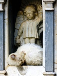 """""""A cat has 9 lives and 9 souls, and it must have 9 guardian angels watching over it."""" --Karen Fields-Hutton"""