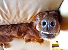 Go away!  I do NOT do mornings!!!