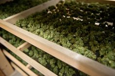 Indoor.Buy Marijuana/ Buy weed /Buy cannabis and marijuana products.You have been thinking of where to get the oldest and the best marijuana strains as well as concentrates and edibles, and place your order to get in shipped within 48 hours max.No Card needed.Every transaction with us is discreet .More info at... http://www.onlinecannabisshop.net Text, call or Whatsapp +1 (484) 706-9210