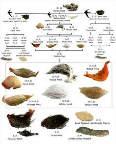 edible birds nest - types of Edible birds Nests