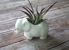 Hey, I found this really awesome Etsy listing at https://www.etsy.com/listing/81536514/elephant-planter-elephant-air-plant