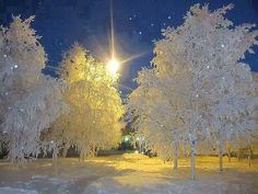 Found this beautiful nighttime winter picture.