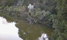 Laguna. Algaida- Los Toruños