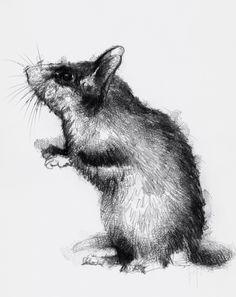 Artist Sean Briggs producing a sketch a day Dormouse  #art #dormouse #drawing #http://etsy.me/1rARc0J #sketch